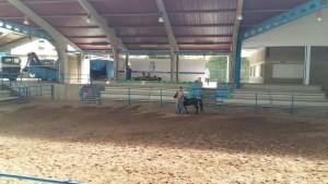 Concurso de Ponis en La Imera